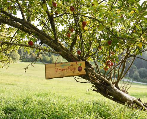 Apfel-Vielfalt rund um das Jugenhaus Berghof