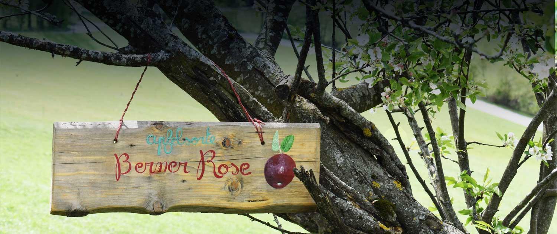 alter Apfelbaum im Garten