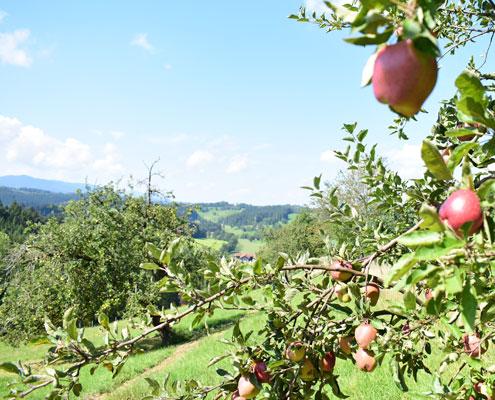 Apfelbaum mit Panorama