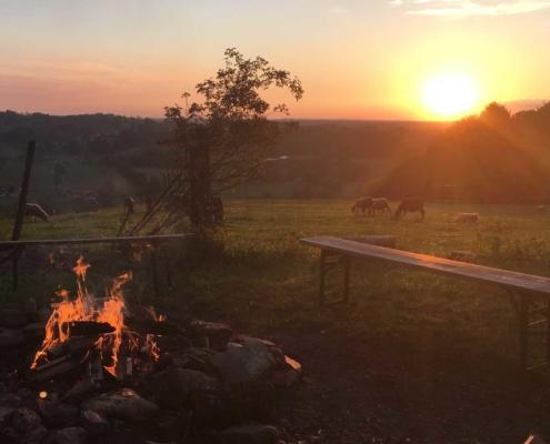 Lagerfeuer mit Sonnenuntergang und Schafen