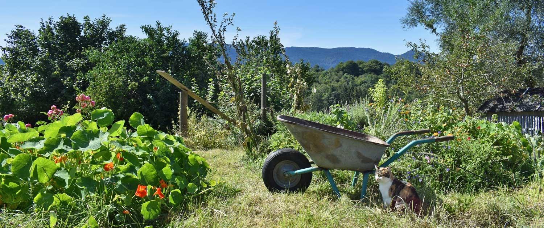 Gartenidylle mit Glückskatze