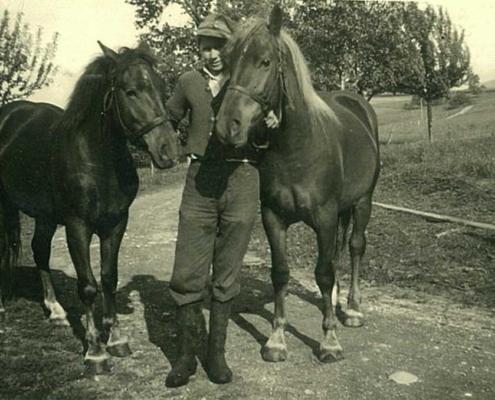2 Haflinger halfen beim Mähen und Heimfahren des Heuwagens
